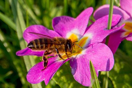 apiculteur 77230